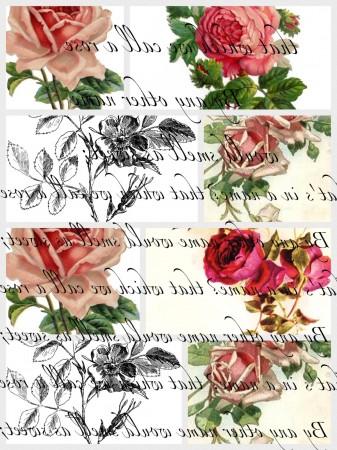 Charlie Juliets Rose-2