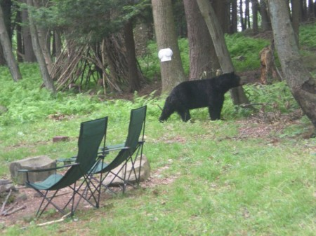 Original picture of the black bear from our cabin.