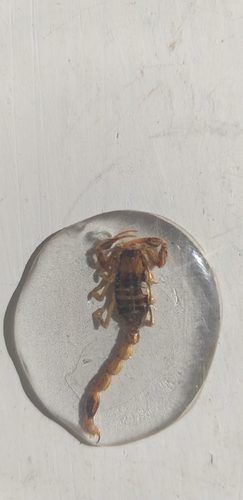Tiny Creatures in Resin, by Joh-Mari